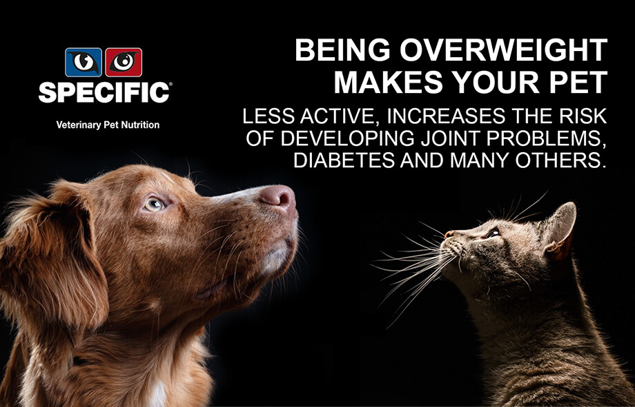 Heene Road Vets - Obesity in dogs and cats - wp