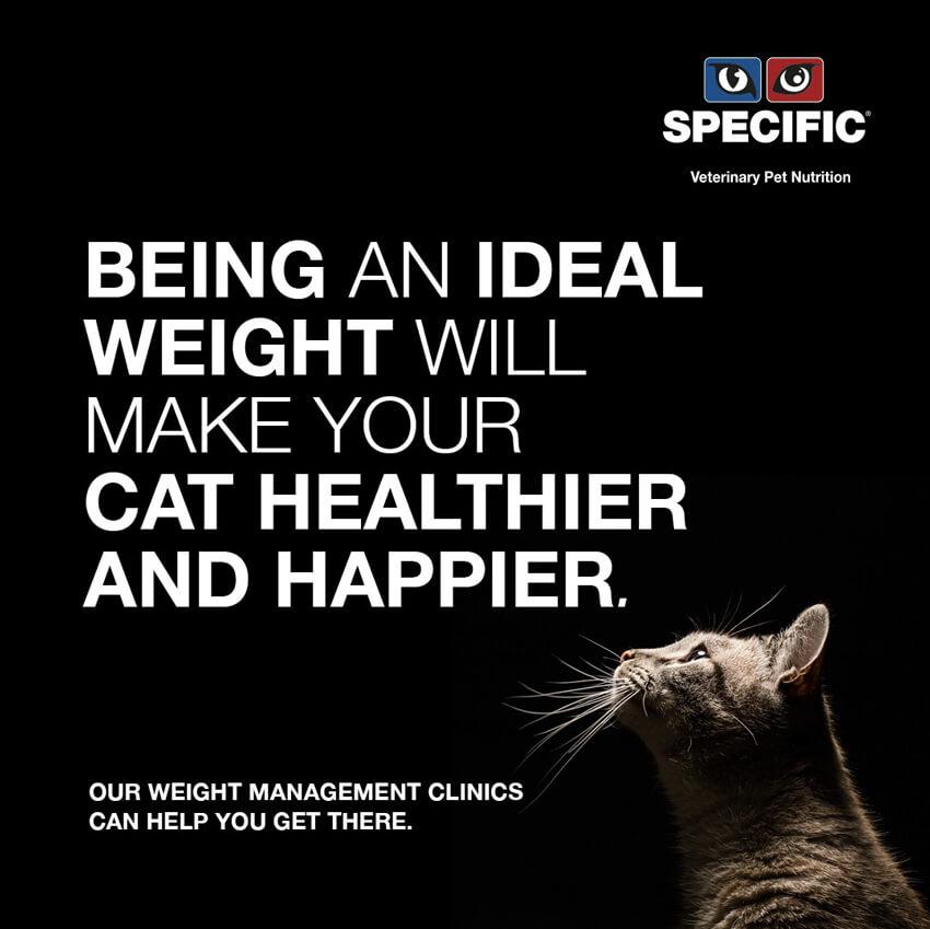 Heene Road Vets - Obesity